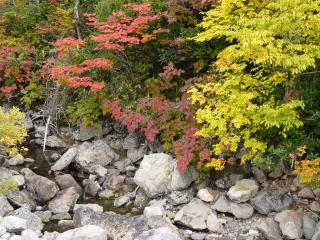 猿倉温泉付近の紅葉
