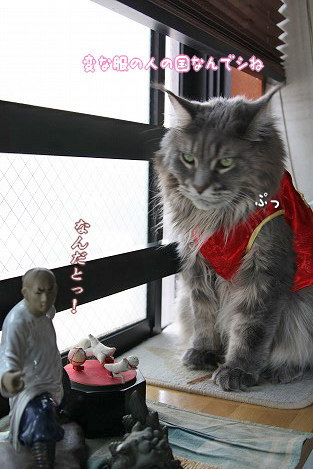 なんだとー!!師父に代わってママが怒るわよ~!ムキャー!! ヾ(`Д´*)ノチャイナテイストのデザインを取り入れたお洋服だって可愛いのがいっぱいあるんだぞー!